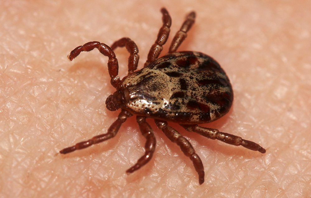 Things That May Make It More Likely You'll Find a Tick Crawling On You This Summer